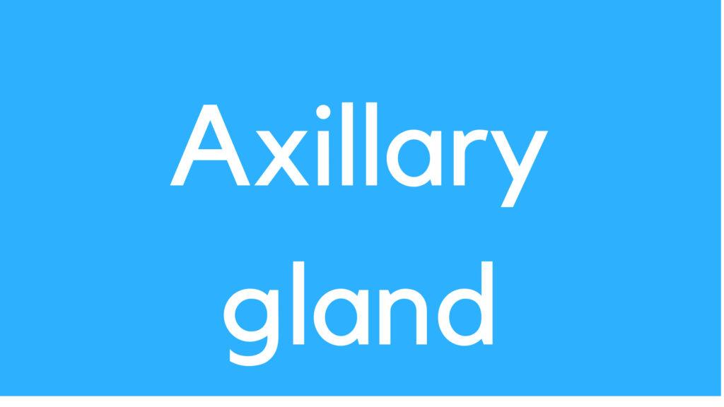 Axillary gland