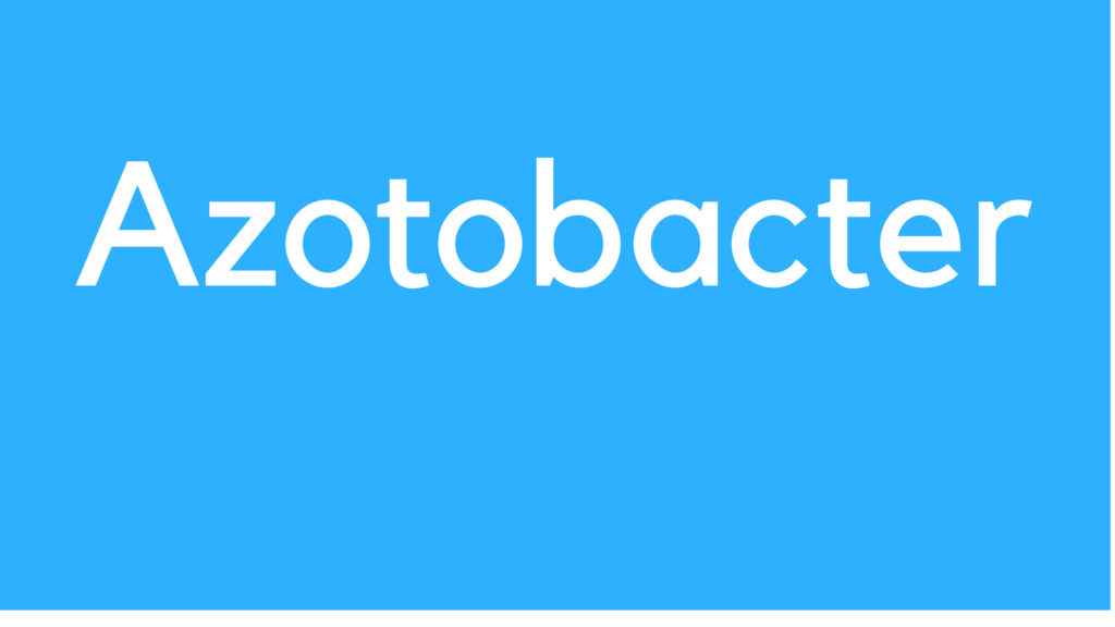 Medical Definition of Azotobacter