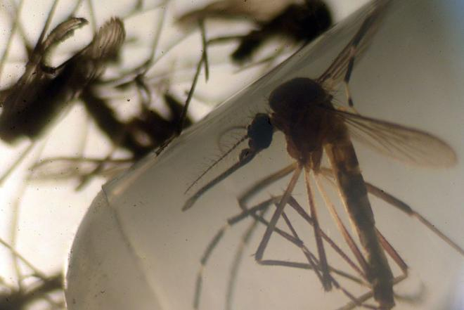 How Would We Go About Stopping The Spread Of The Zika Virus In The US?